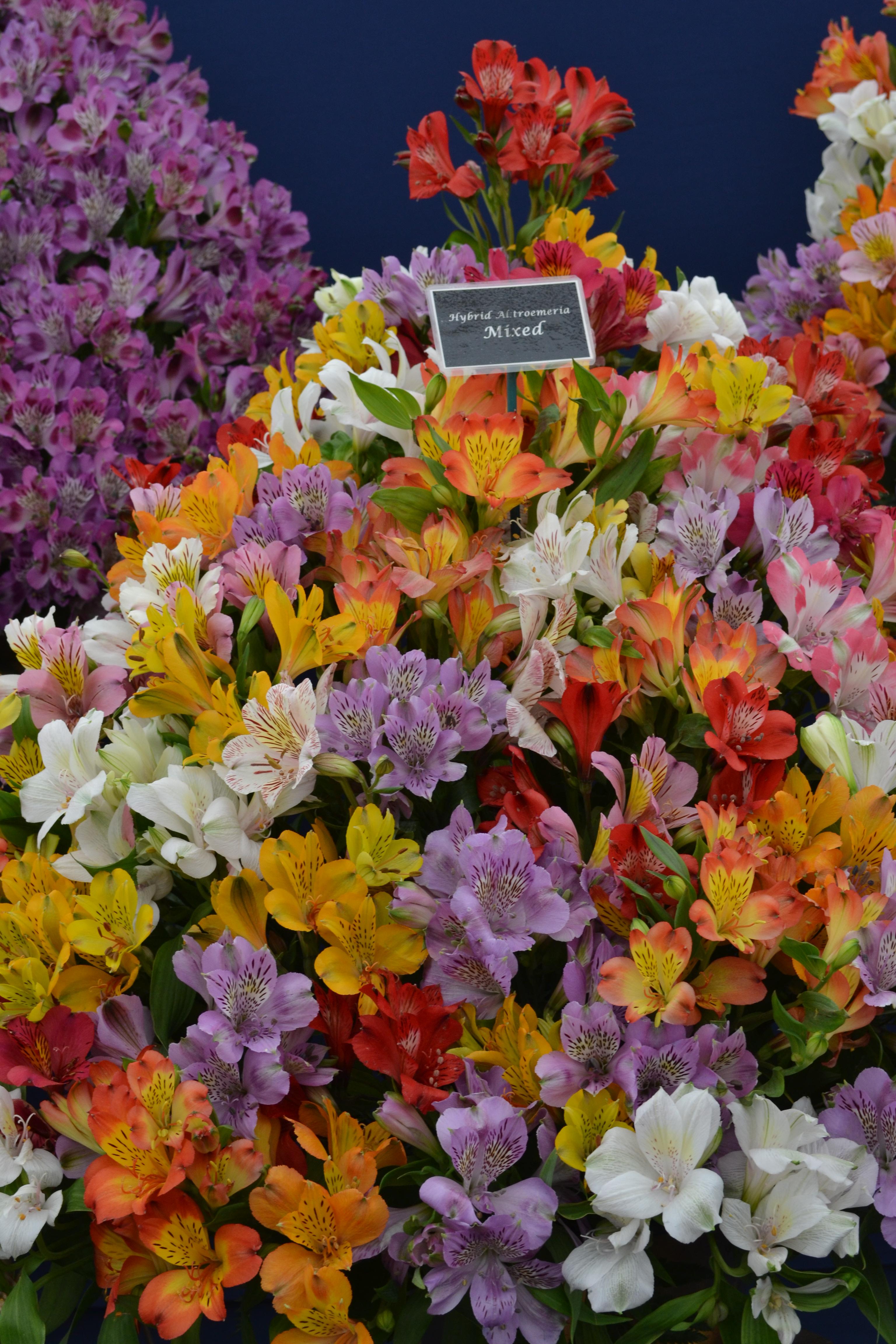 geraniumcolor.jpg