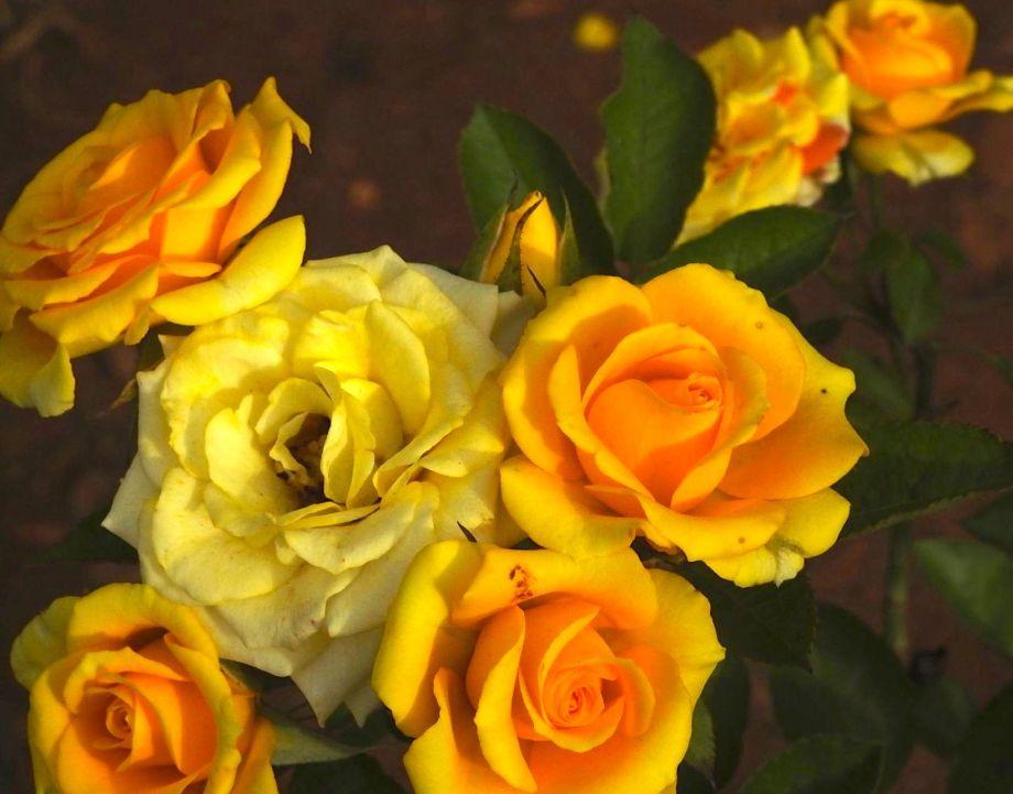 rosewedding.jpg
