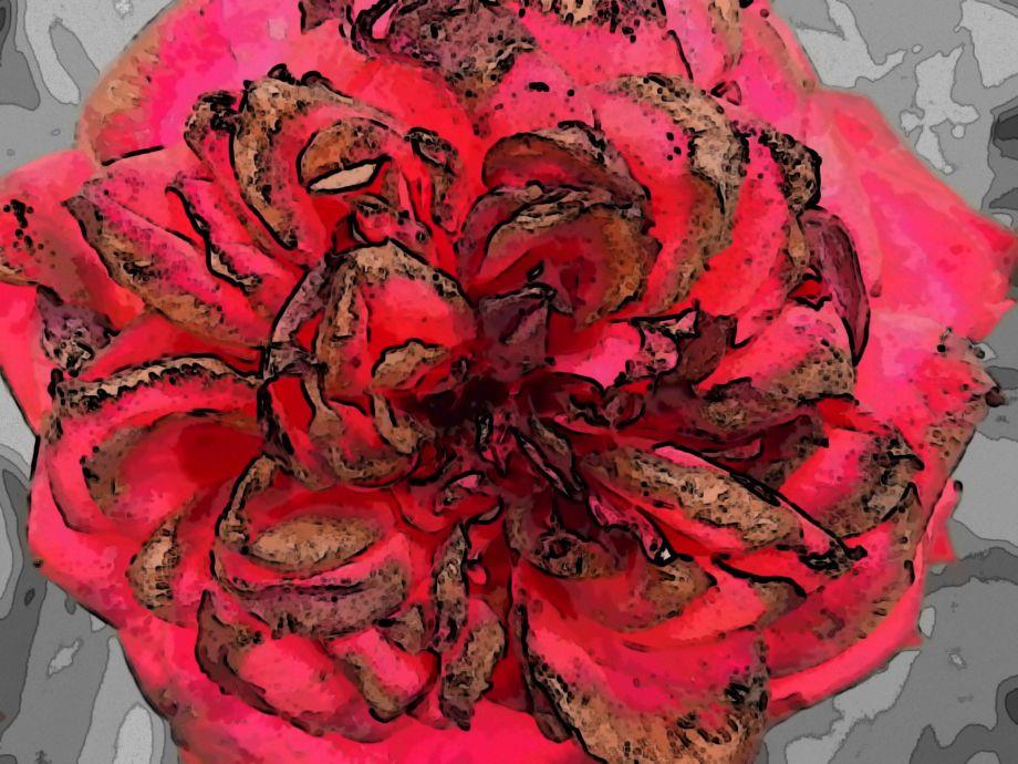 rosecool.jpg