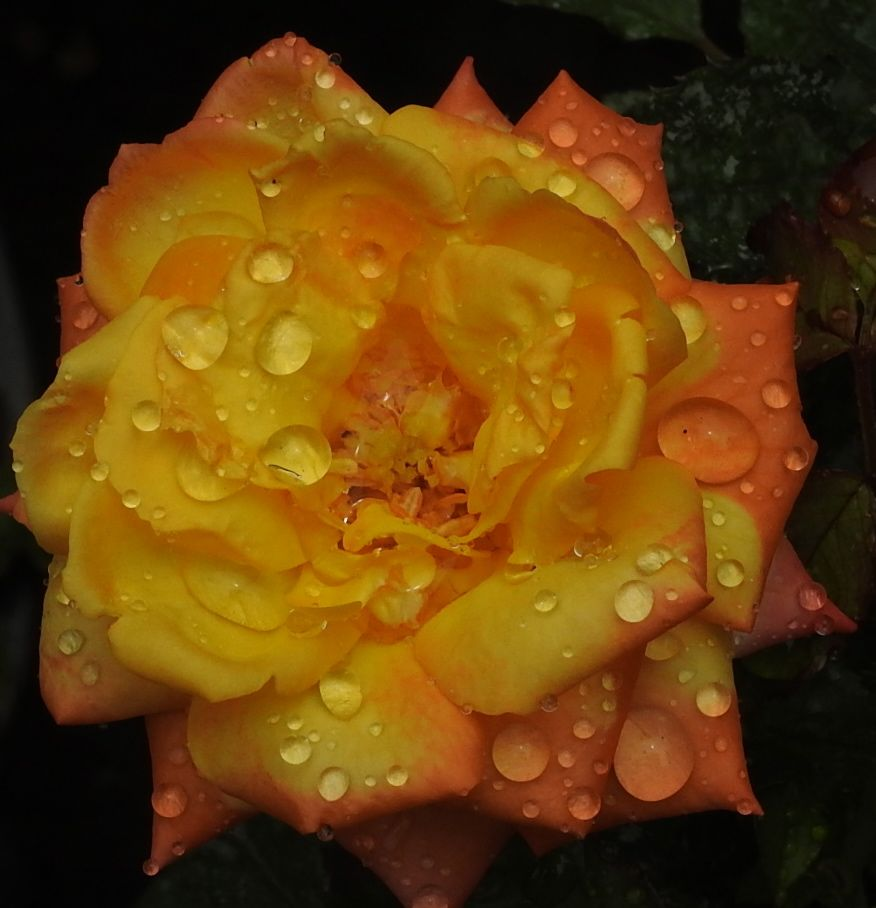 orangewash