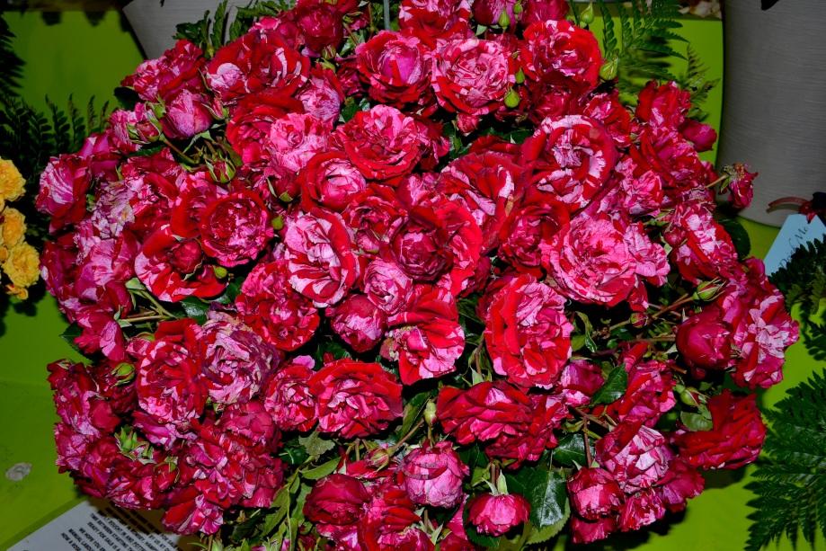 rosebowl.jpg