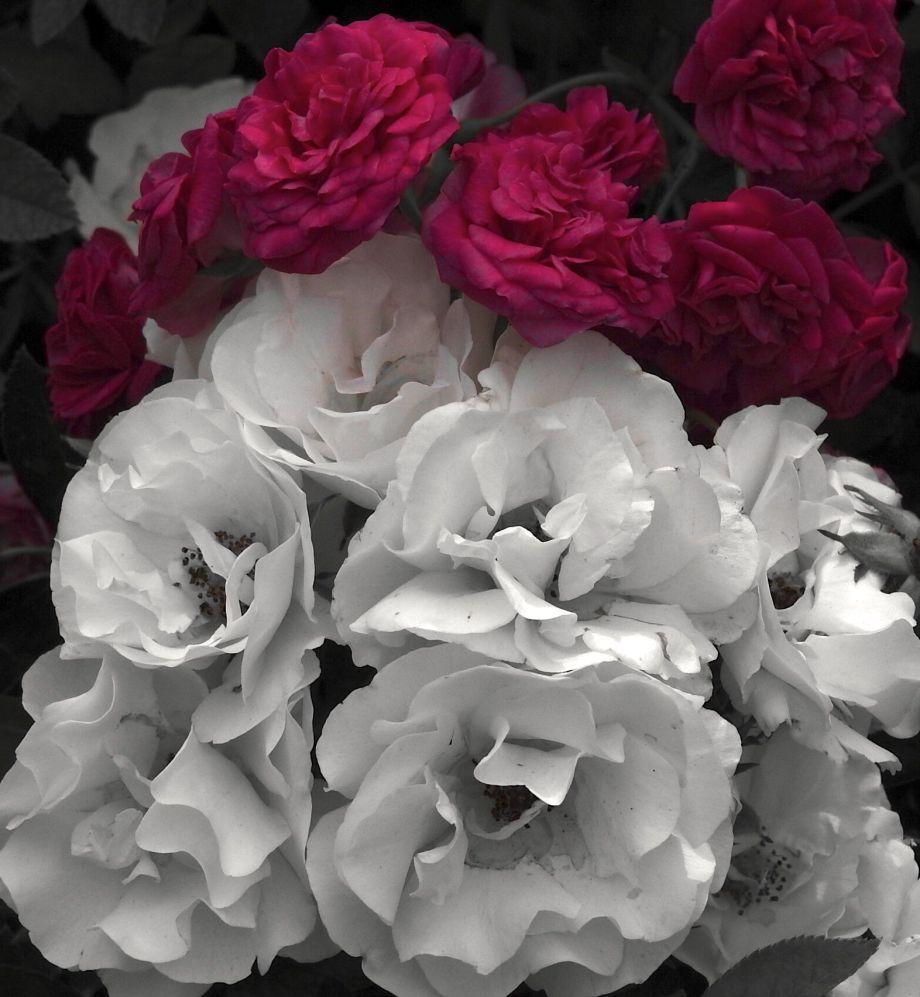 rosebag