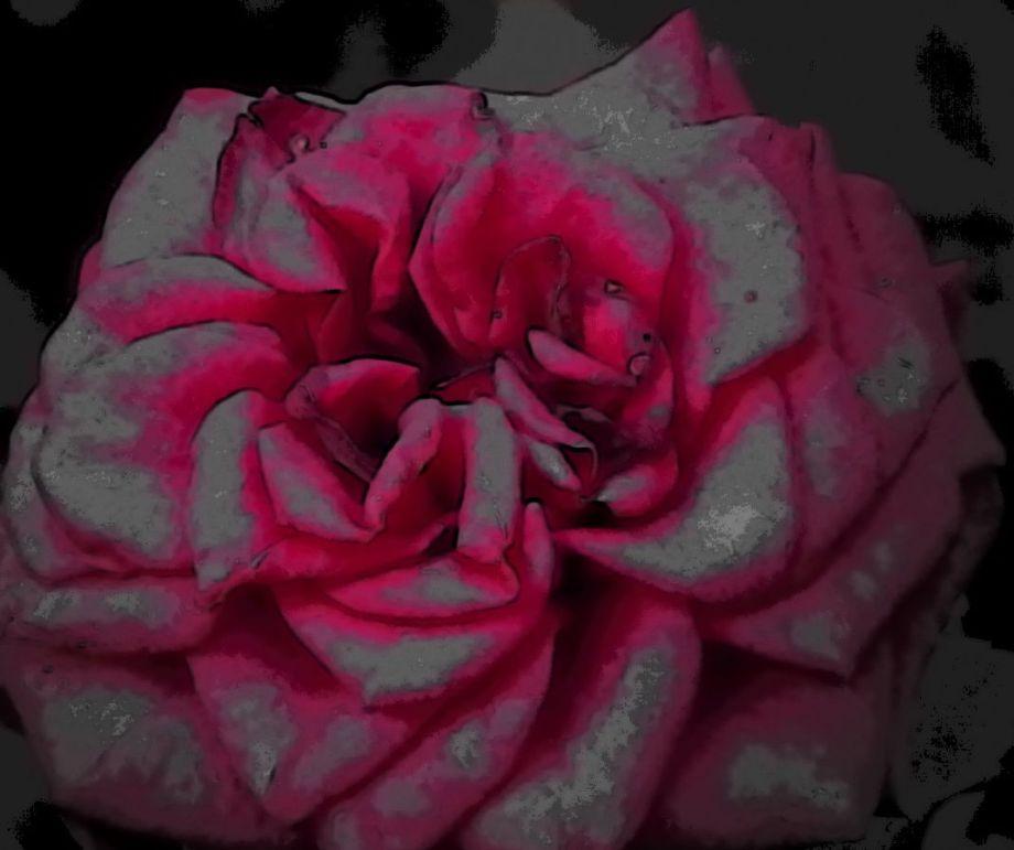 rosesonyourside