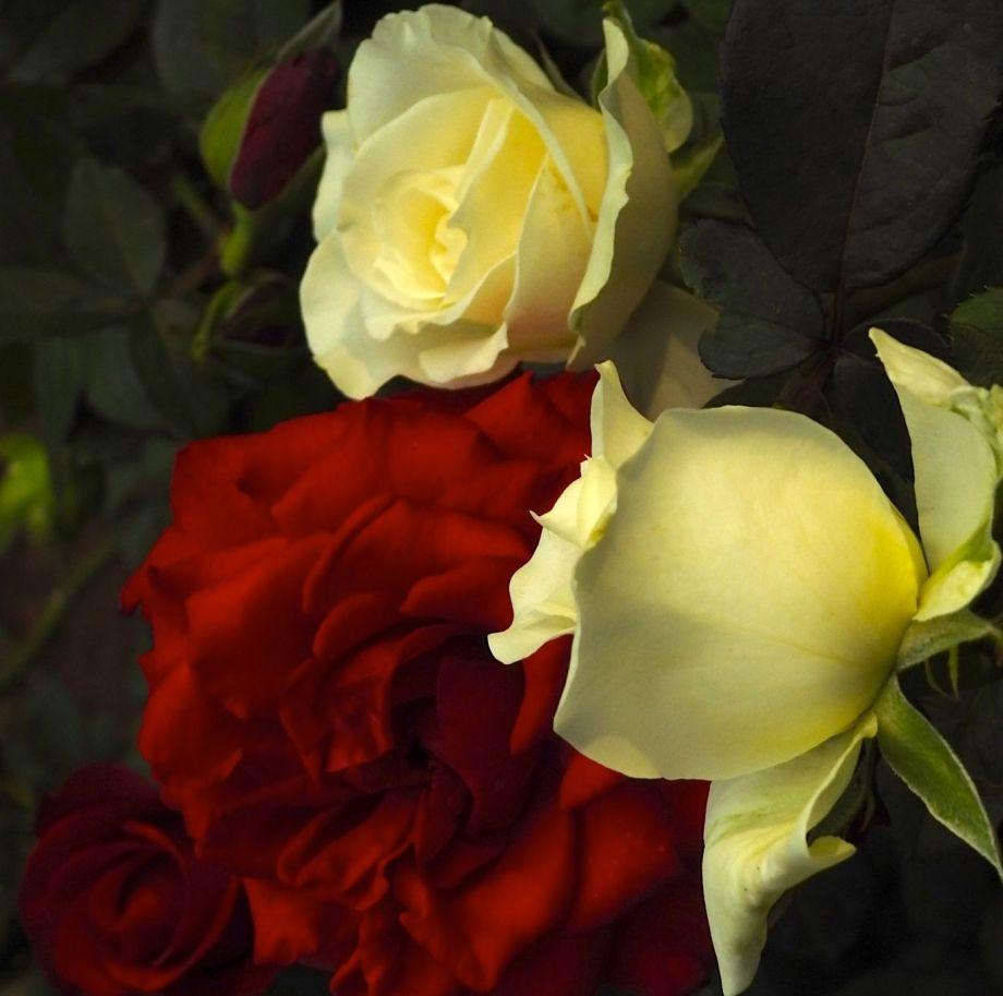 floralg