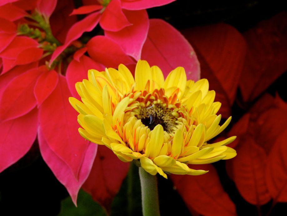 floraldresscode