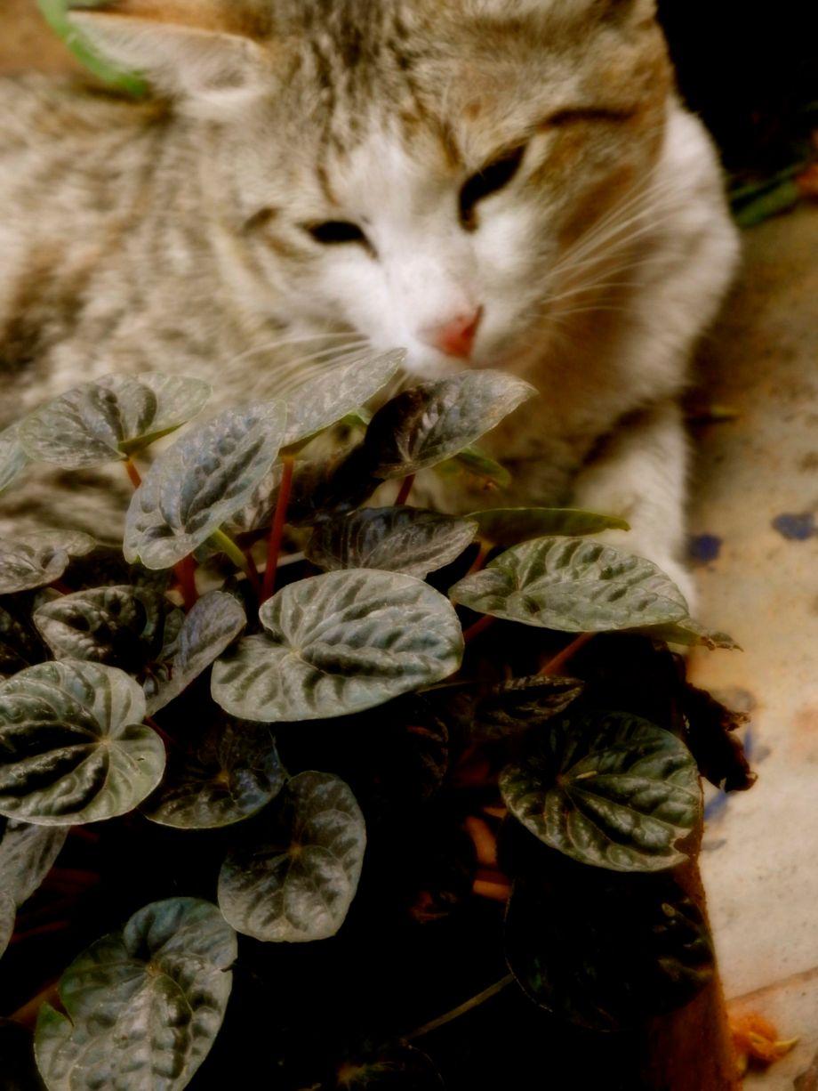 leafygarden