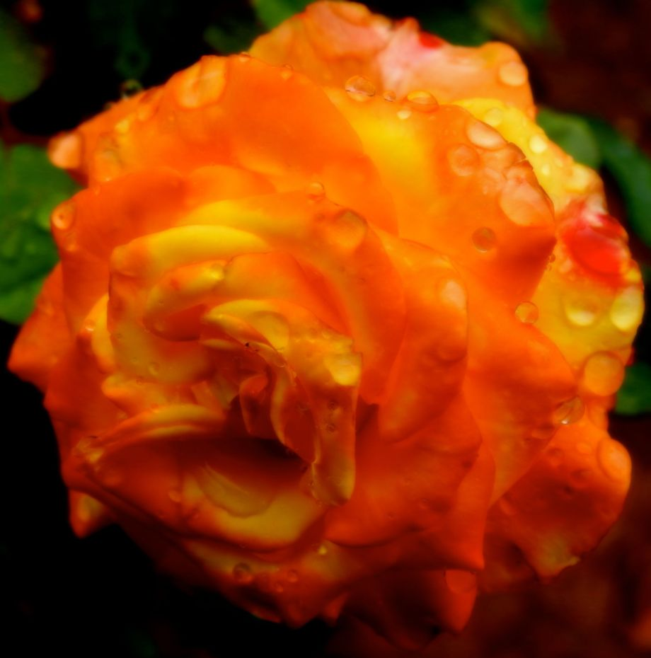 raininggold