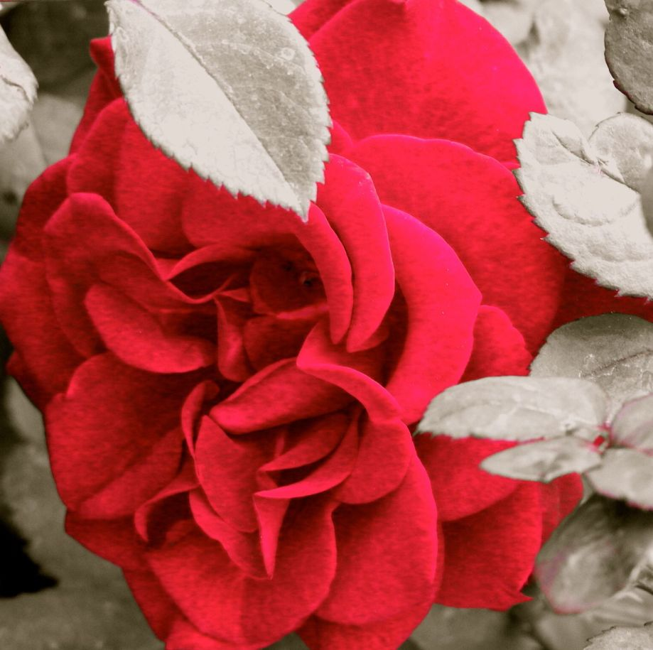 red&greyleavesofgrace